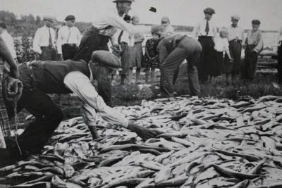 jaolla-paljon-kaloja-kuva-fiskemuseum-haparanda-stad