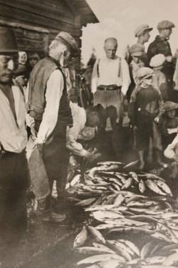 siianjako-1900-luvun-alussa-kuva-suomen-kalakirjasto