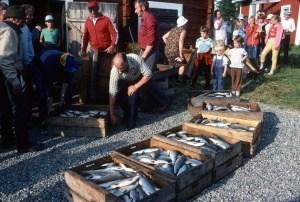 siianjako-1984-kuva-suomen-kalakirjasto
